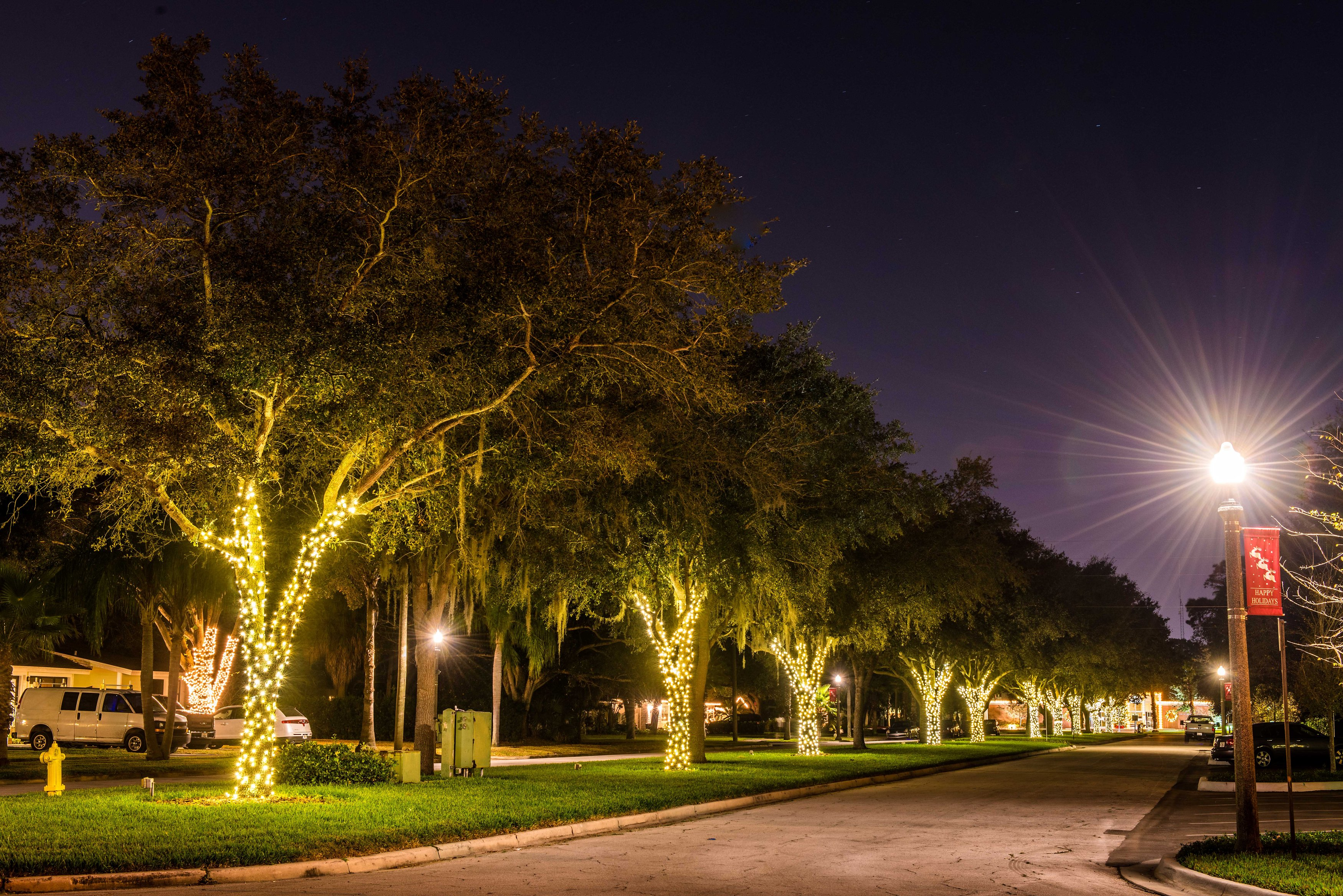 Oak trees along The Mall lit up with white lights for the holiday season
