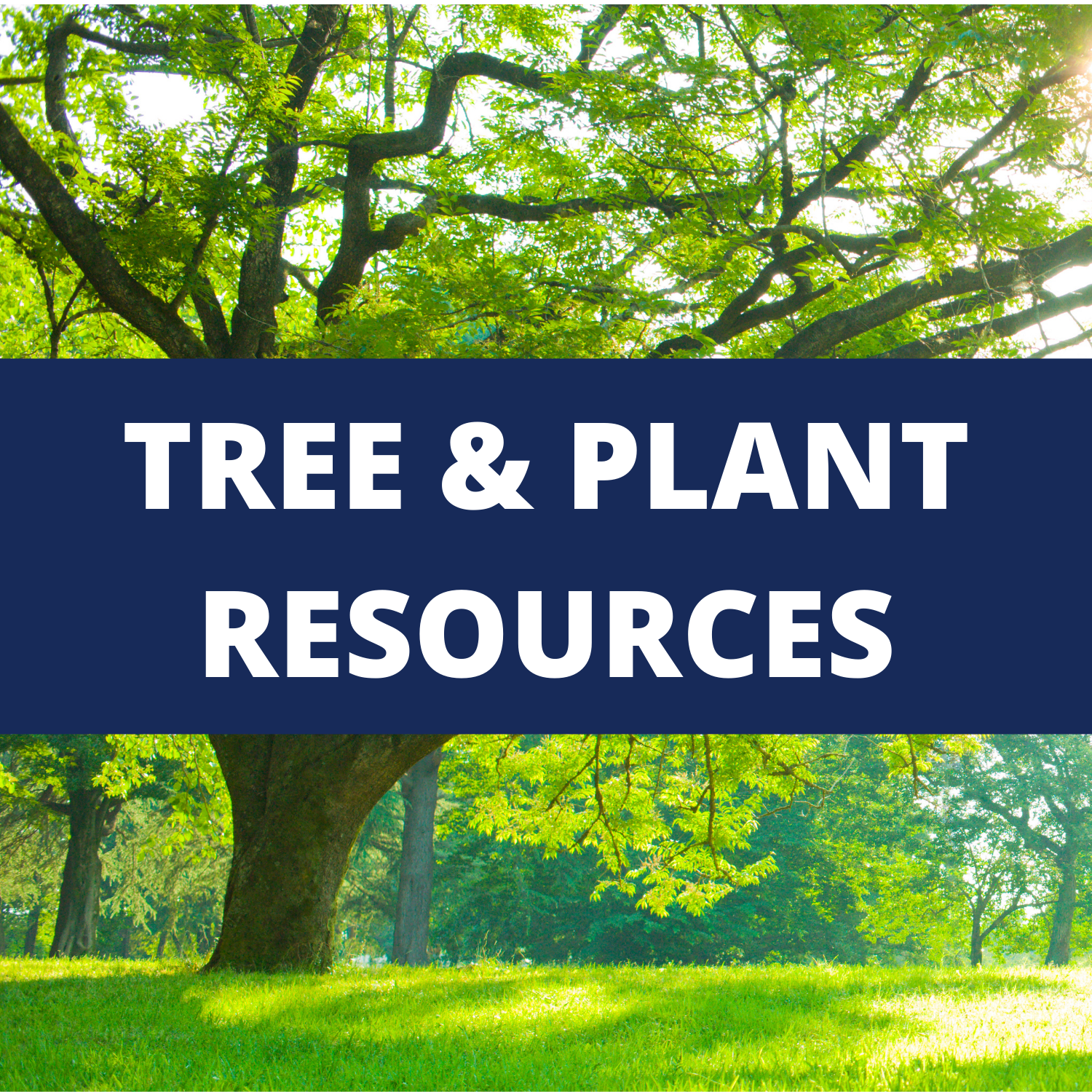 Redirect to Tree & Plant Resources