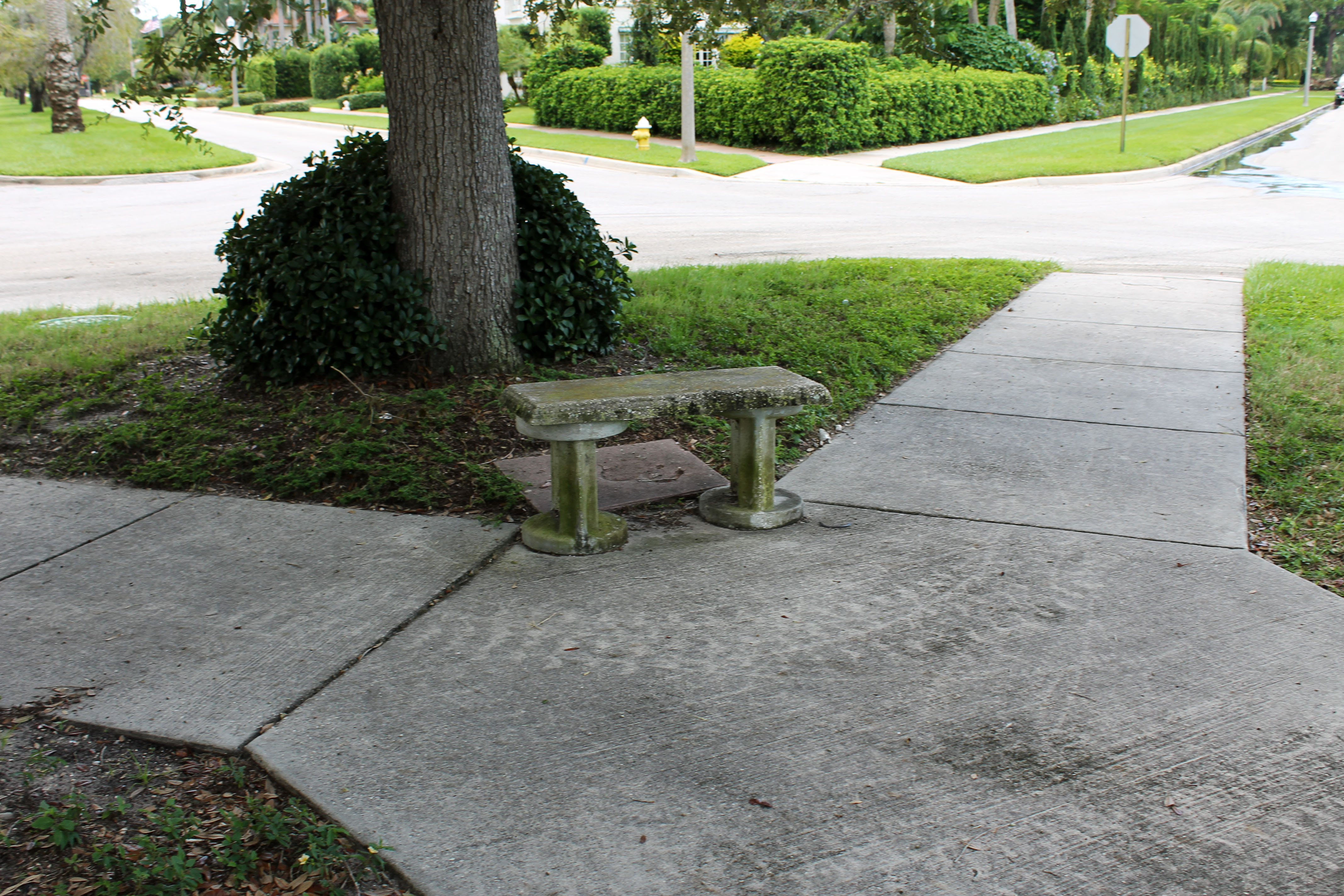 A concrete bench in Palmview Park that sits under a tree and on a sidewalk