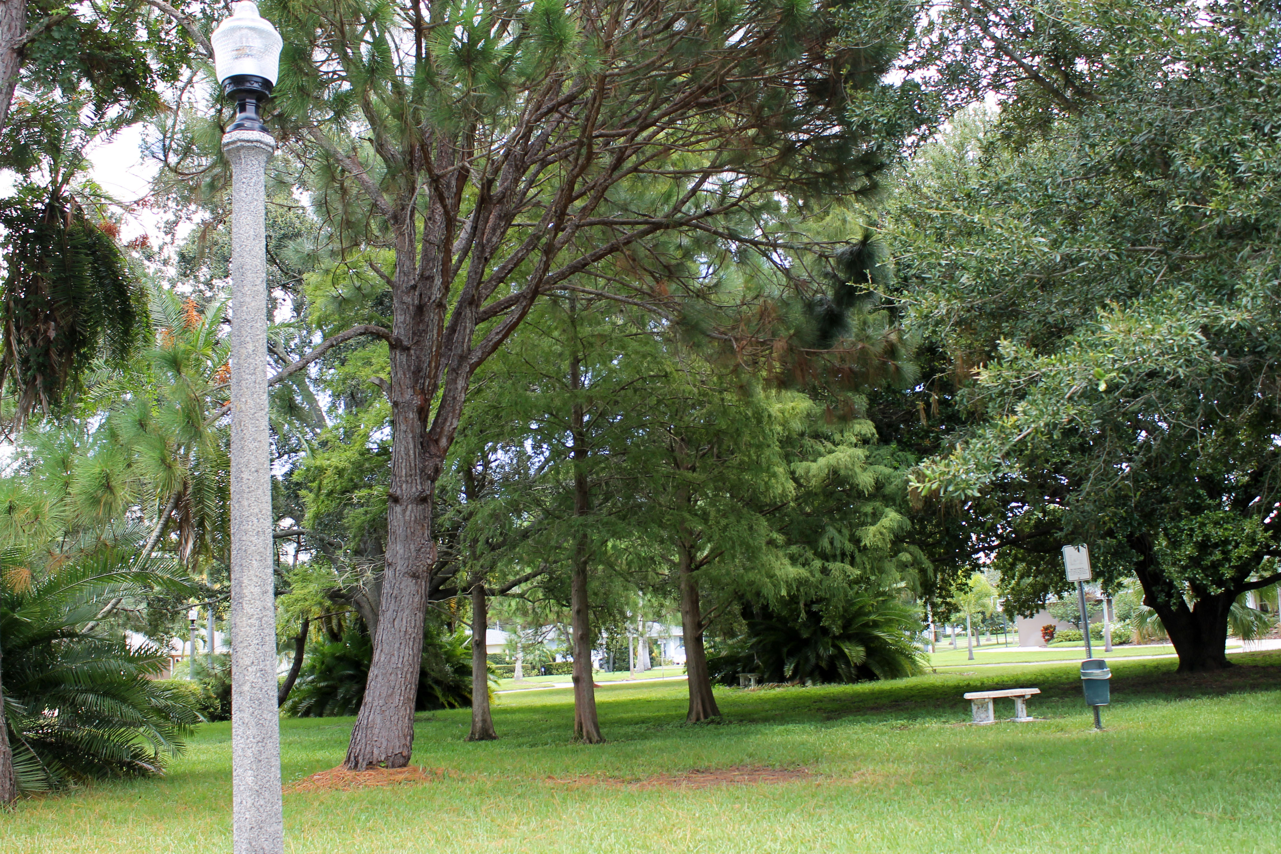 Light pole in Pinellas Park with trees, a bench, and a dog pot in the background