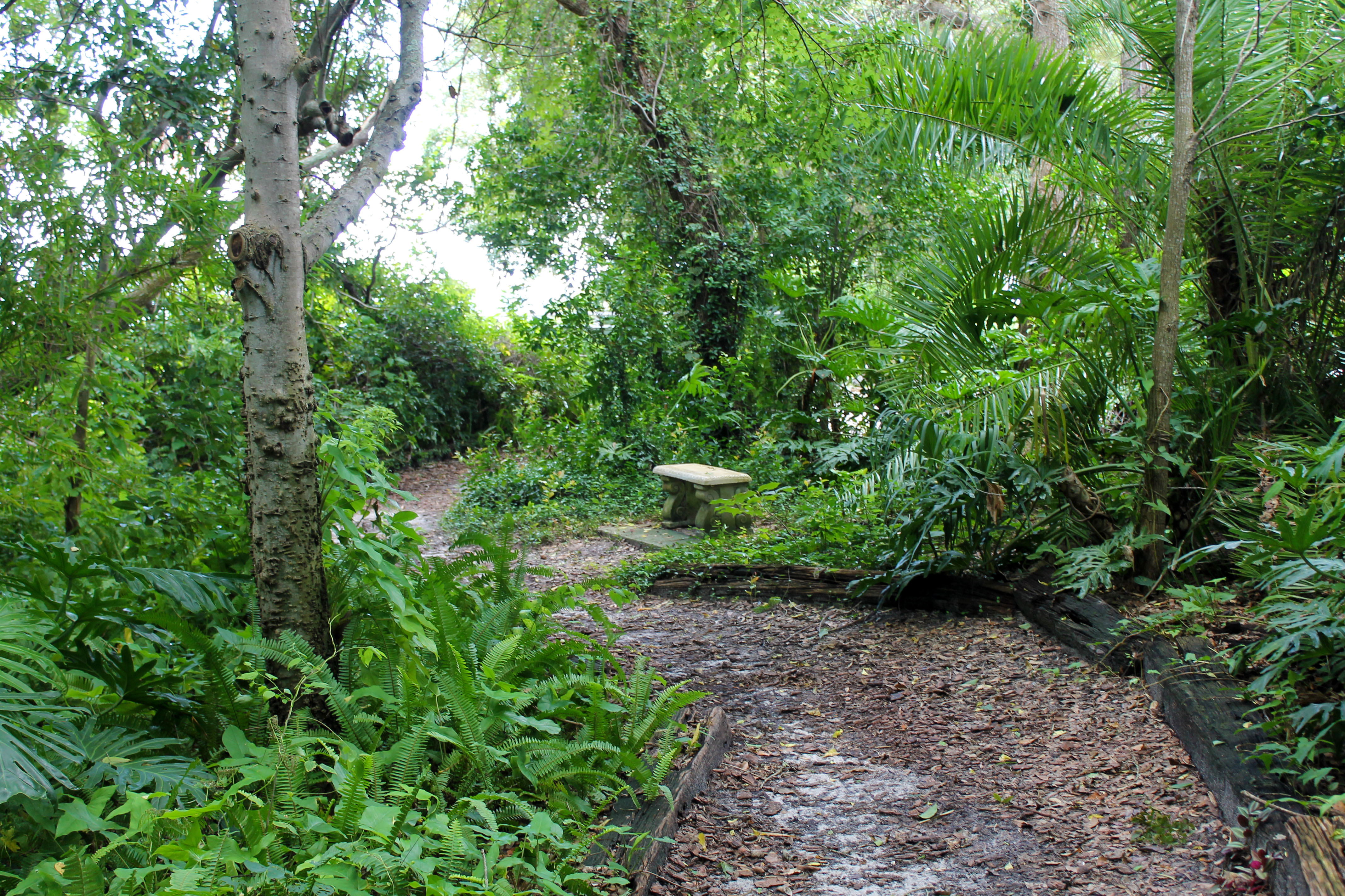 A winding path through Nature Park that has a concrete bench along the path part-way through