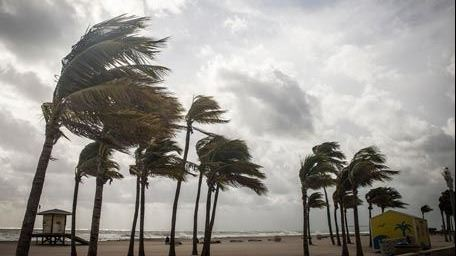 Palm trees being blown by strong wind