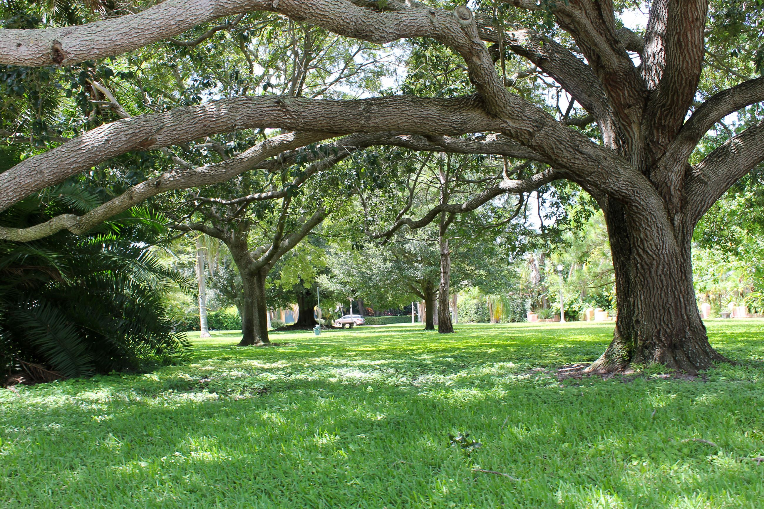 Large oak tree provides shade for the grass throughout DeSoto Park