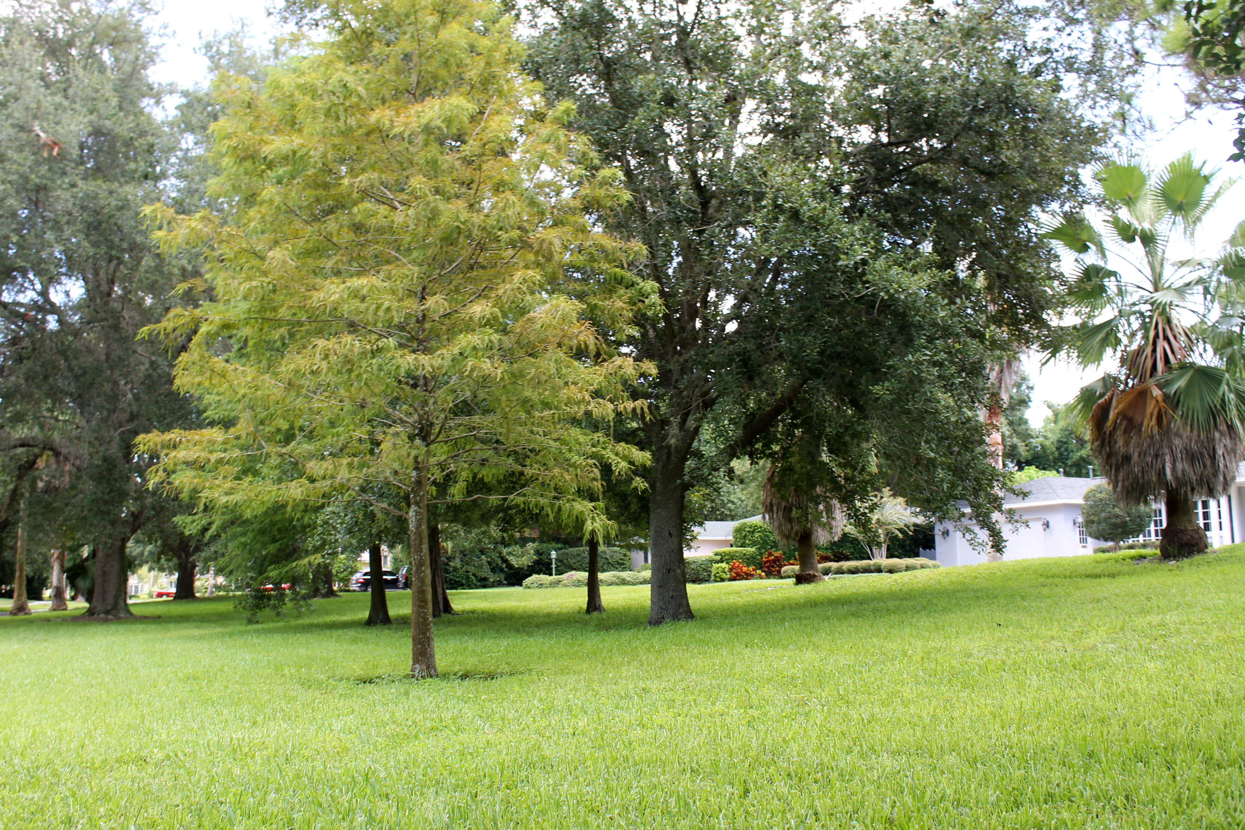 An open green space in Gaienne Park with trees scattered throughout
